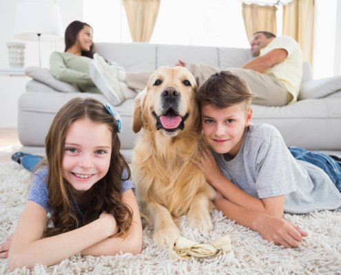 Dog friendly holiday home insurance
